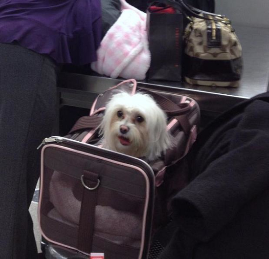 We know you have to do a job, TSA folks, but jeez. ('Princess', Newark, NJ, airport, 2011.)