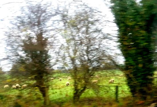 galway farmland