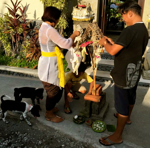 bali cleansing rescue dogs1