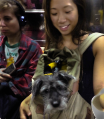 Subway dog3