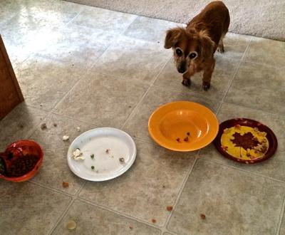 Ginger please eat